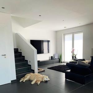 Unsere TV Boards schaffen die perfekte Wohlfühl-Atmosphäre. Und das nicht nur für uns 🐕🤍   _____  #homeinspo #homeinterior #interiordesign #interior4all #interior #interiorinspo #livingroom #livingroomdesign #myhome #myhomestyle #furnituredesign #Wohnzimmer #livingroomgoals #livingroominspo #livingroomideas #meinzuhause #einrichtung #inneneinrichtung #einrichtungsideen #stylishhome #cleandesign